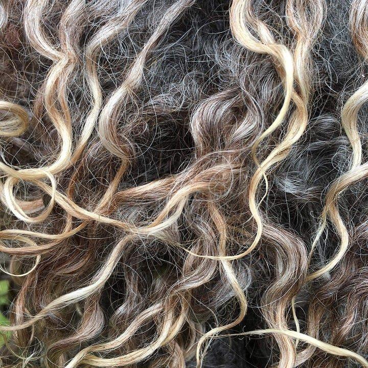 Wensleydale Natural Black fleece wool locks