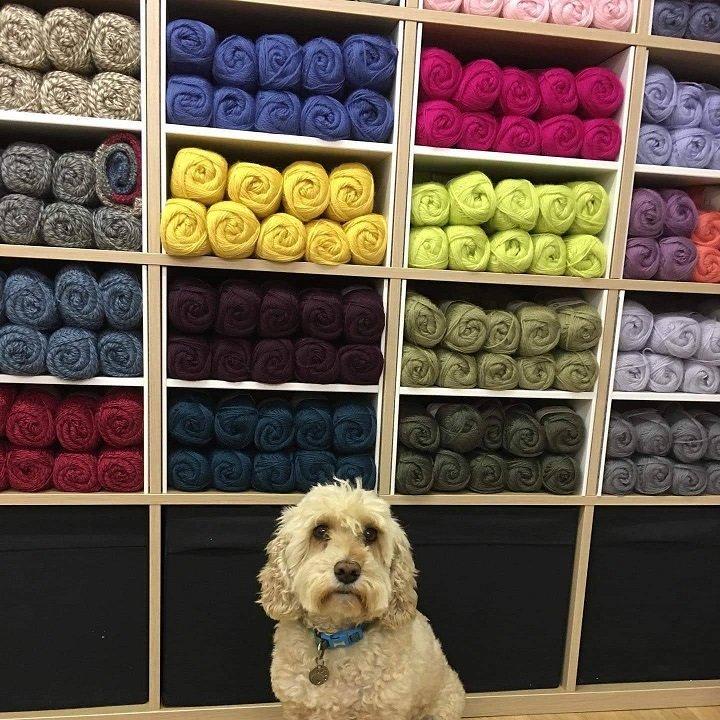 Wensleydale Wool with Dog