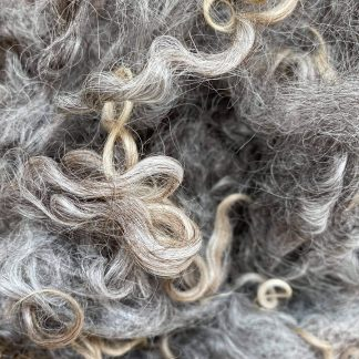 Wensleydale Longwool natural Grey Locks