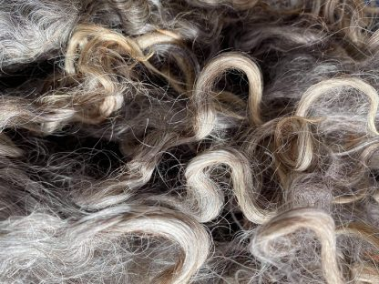 Wensleydale natural Grey fleece Locks