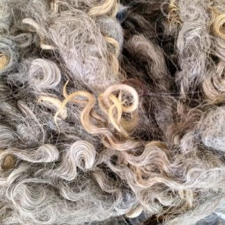 Natural Black Wensleydale Longwool fleece locks