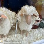British Wool sheep models enhanced with Wensleydale locks on display in our Shop window